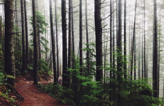 campagna donazione alberi veneto